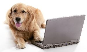 Dog wearing glasses sitting at a computer