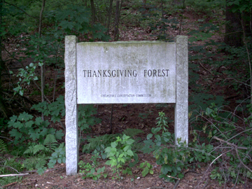 Thanksgiving Forest Reservation