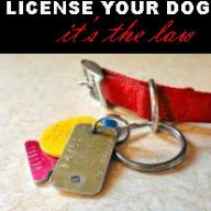 (New) Dog Licence .png