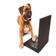(New) Online Dog Licence .png